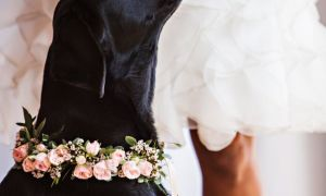 29 Luxury Dog Wedding Dresses