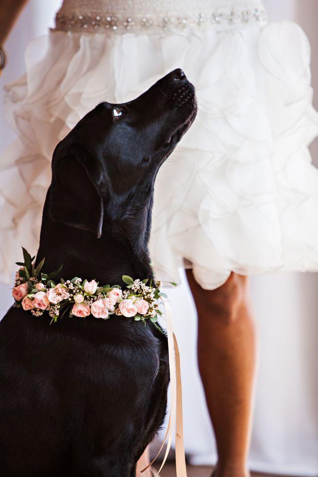 Dog Wedding Dresses Elegant Mint Gold and Pink Spring Wedding Inspiration